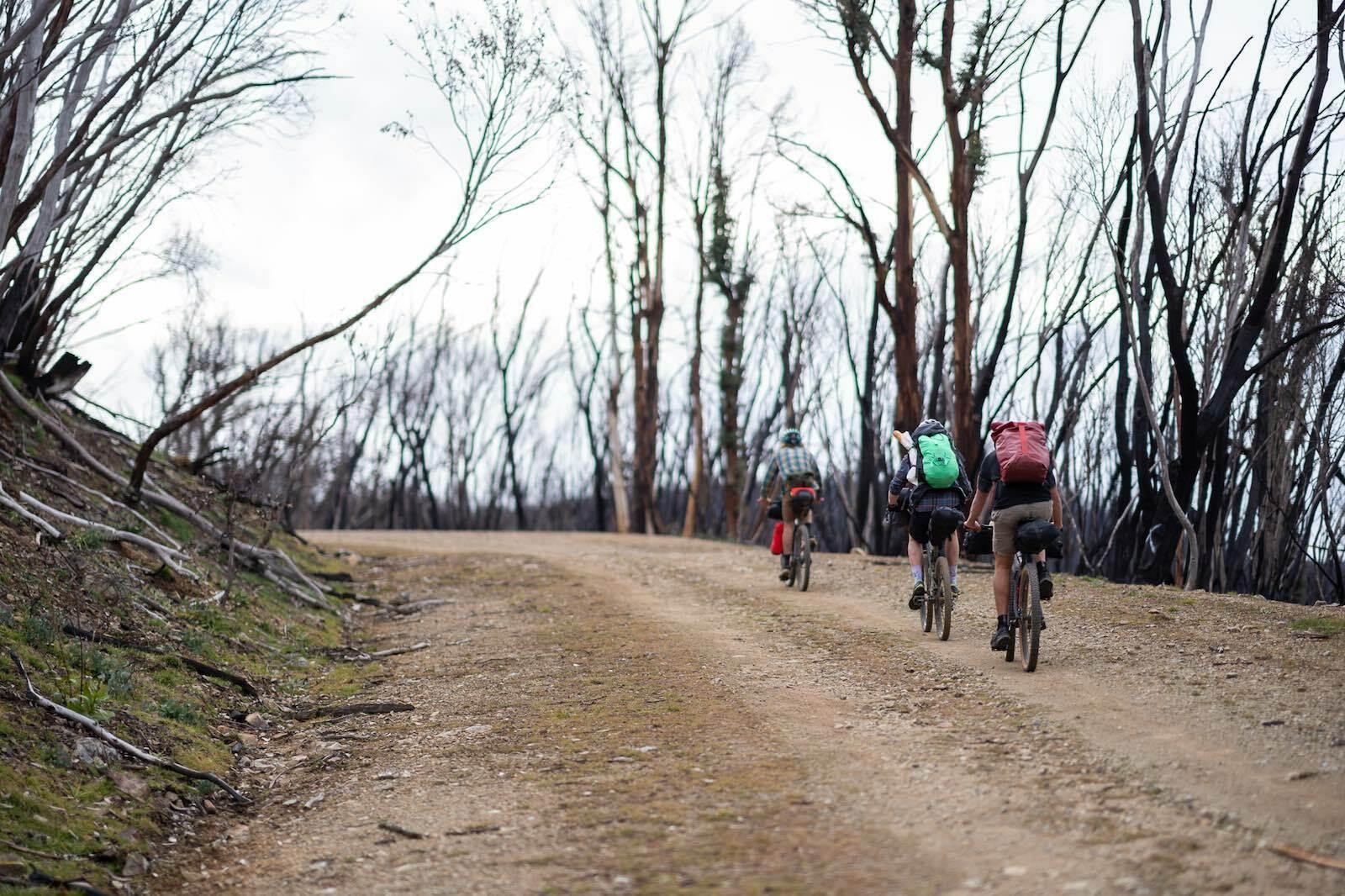 bikepacking through a forest in the Jagungal Wilderness
