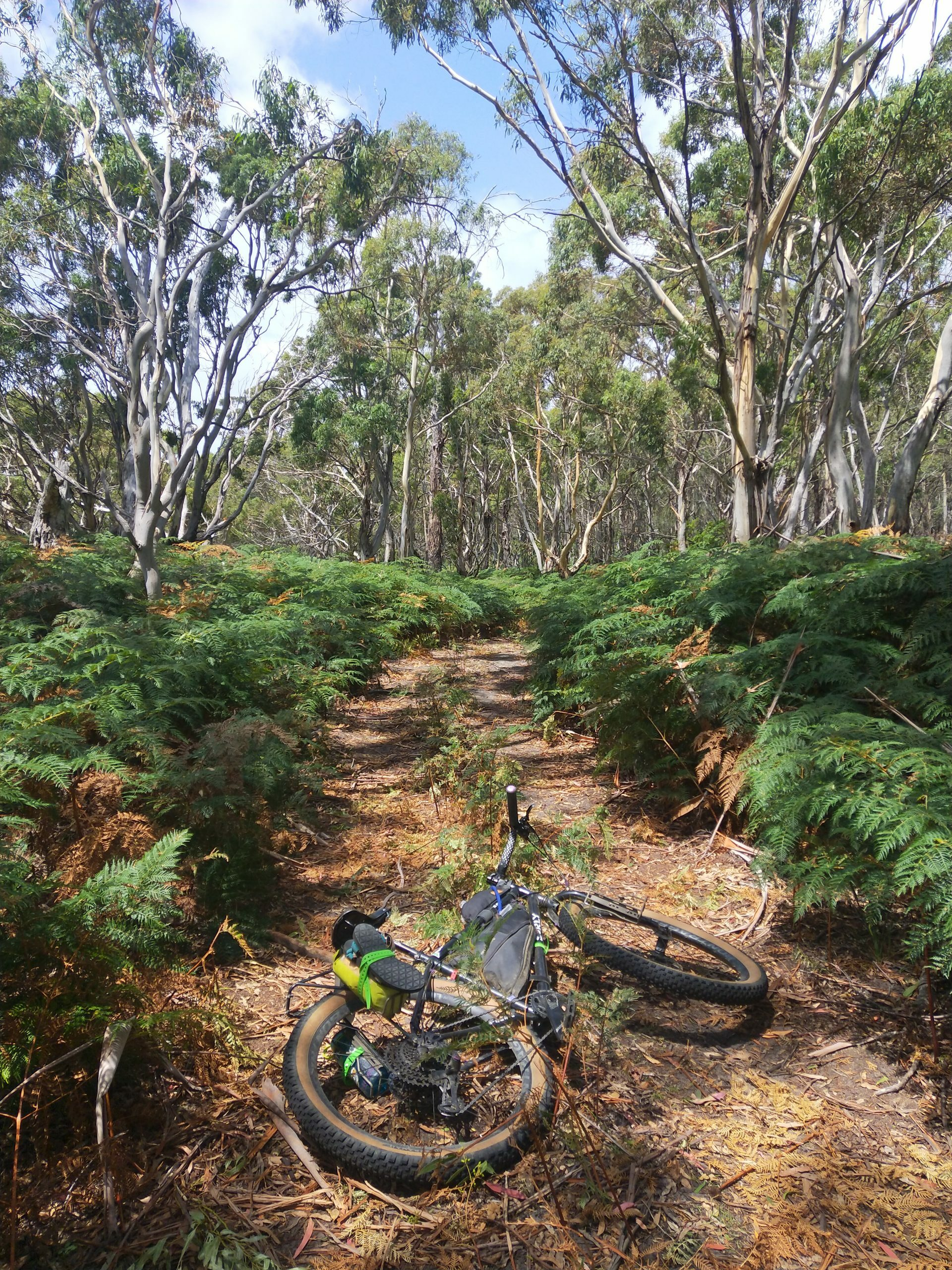 Surly bike in the forests of Tasmania, Rediscovering the benefits of bicycles