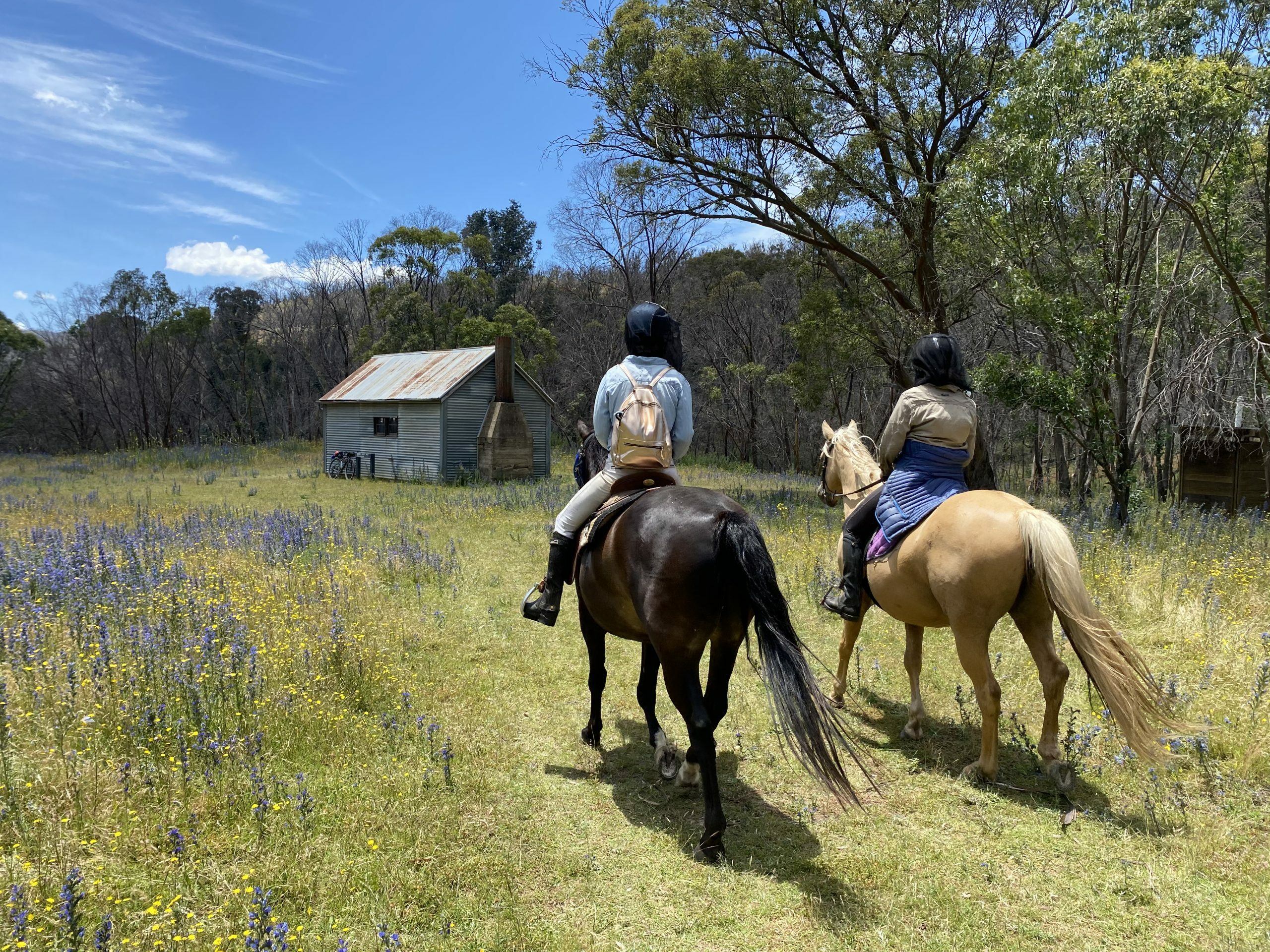Horse camping to Horse Gully Hut