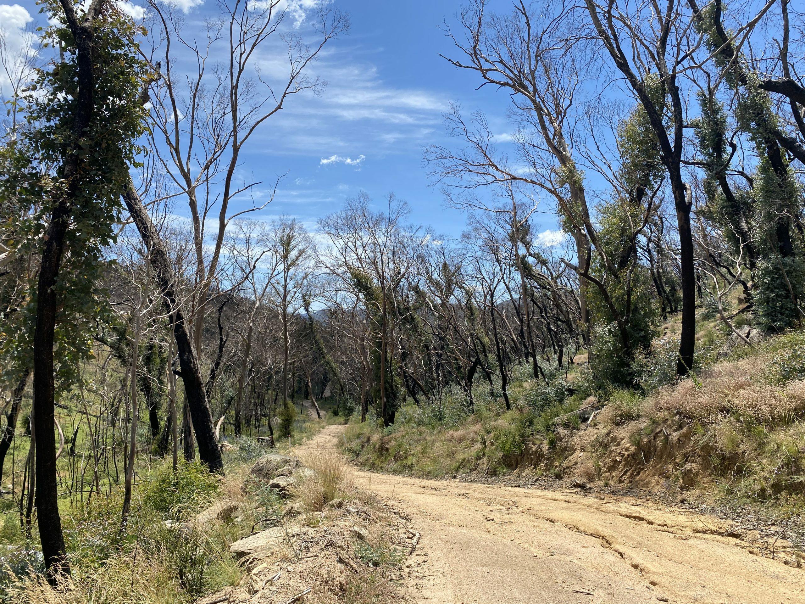 Naas Road fire trail