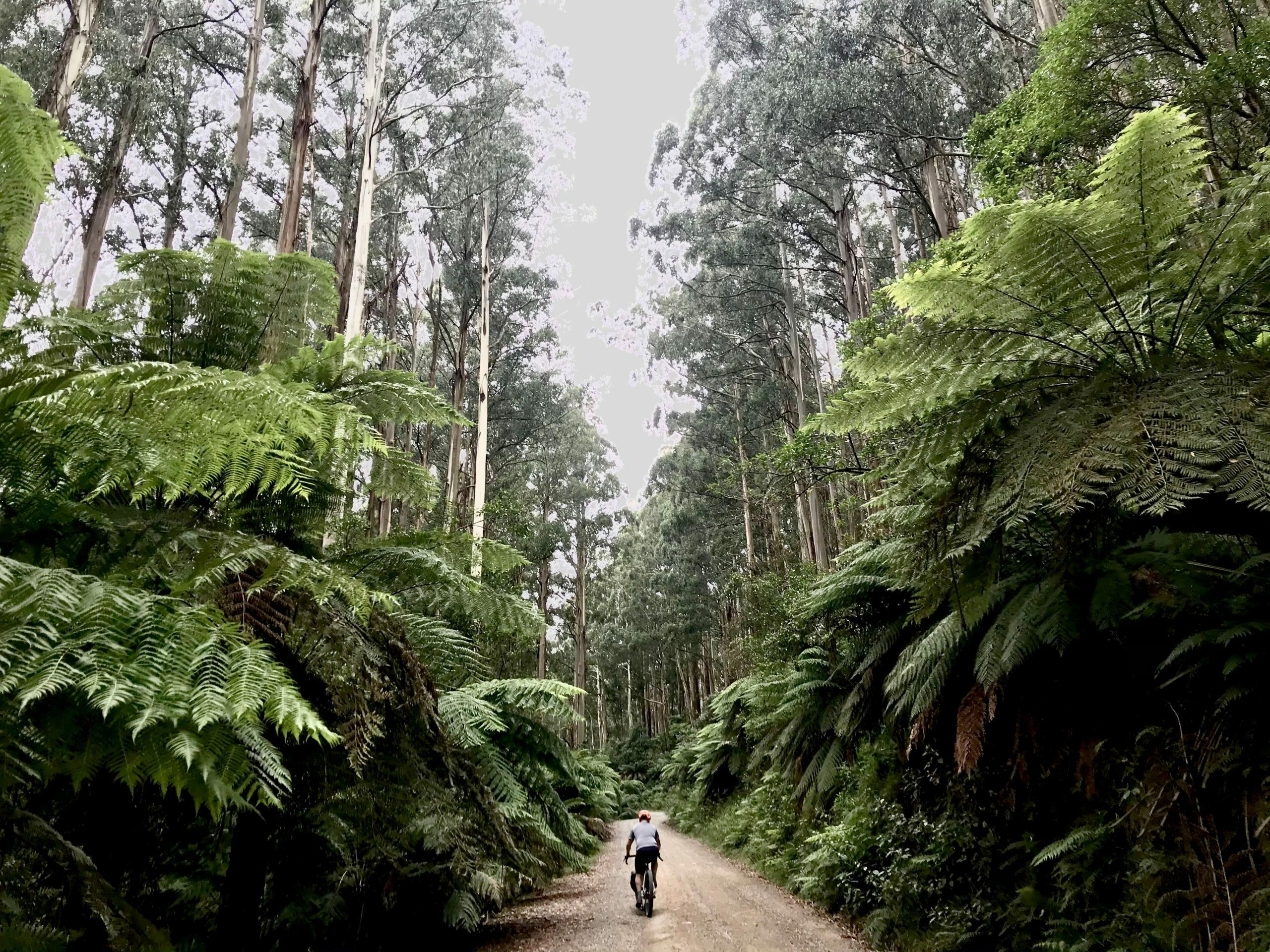 Ferns of the Victoria divide 550 bikepacking race