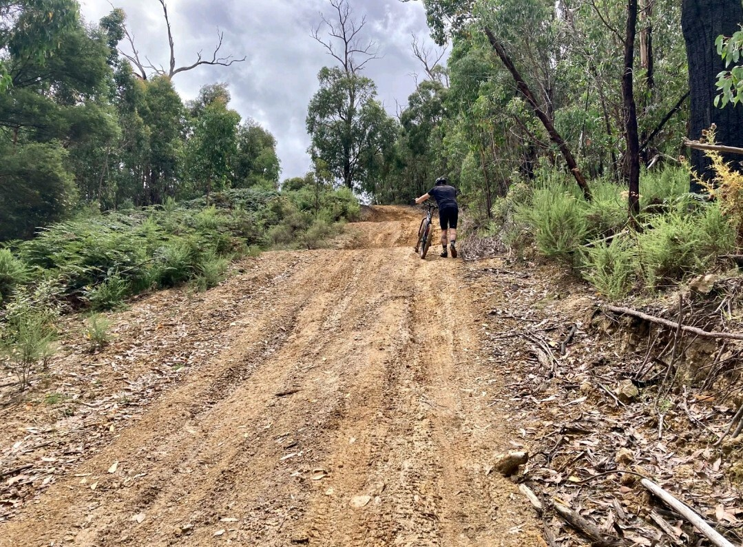 Hike a bike up Pauls Creek Track