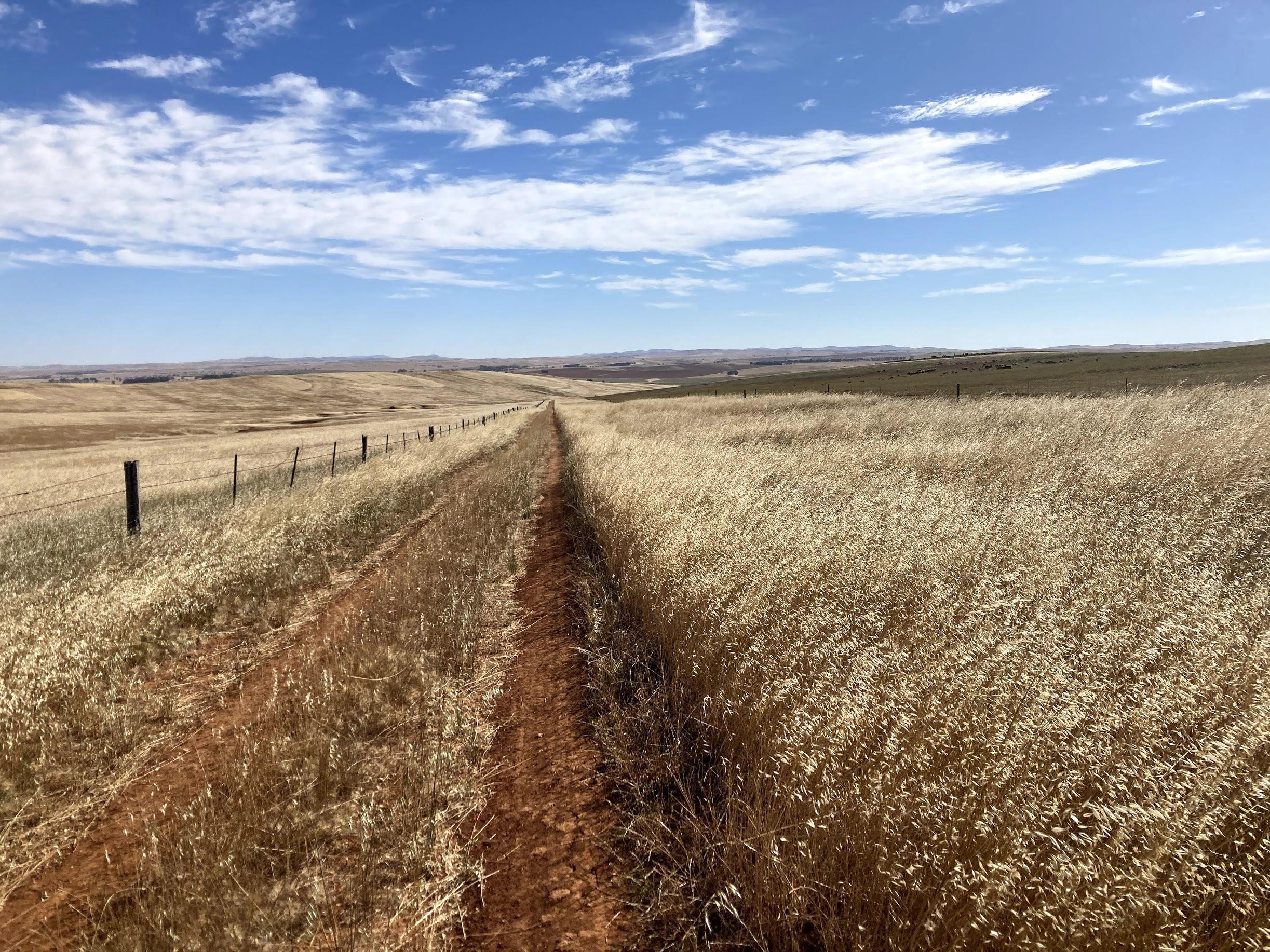 No wet Mawson Trail mud in Summer