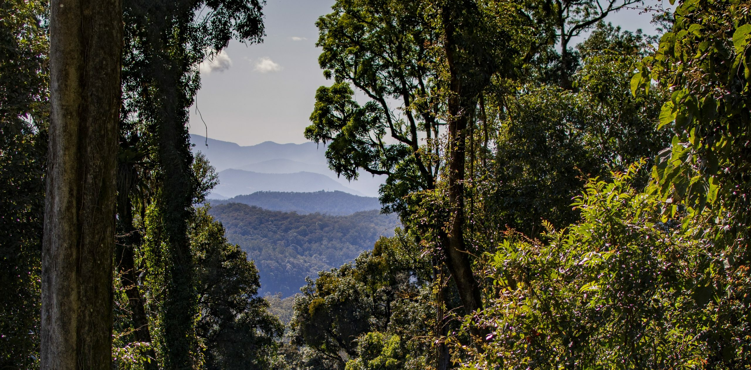 View of the Border Ranges